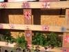 Fabriquer une palette végétalisée ou mur végétal