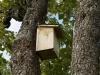 Comment fabriquer un nichoir à oiseaux ?