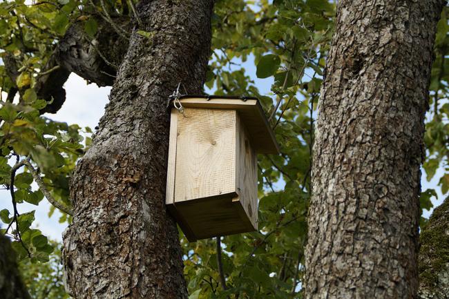 nichoir à oiseaux ?