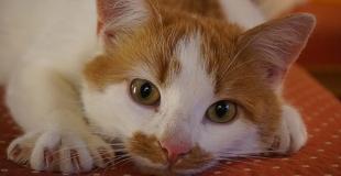 Comment fabriquer un griffoir pour son chat avec de la récup ?