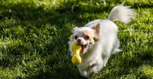 5 DIY à faire soi-même pour son chien